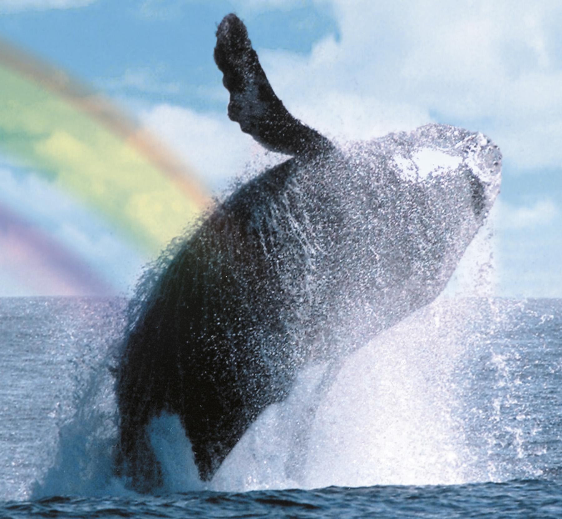 Сегодня - Всемирный День Китов* Сколько романтических соплей было